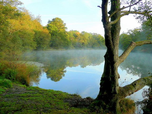 Lower Cannop Pond; October morning mist 1