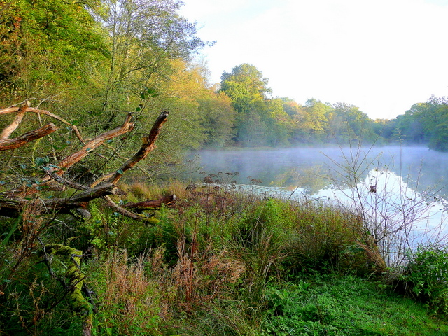 Lower Cannop Pond; October morning mist 2