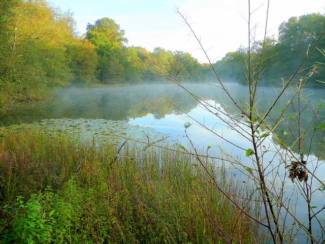 Lower Cannop Pond; October morning mist 3