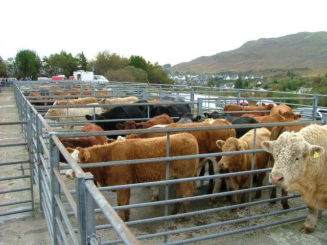 Portree cattle mart