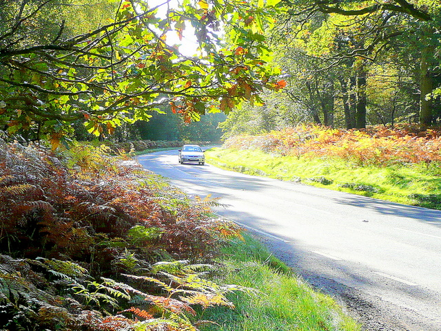 B4234, New Road, near Parkend