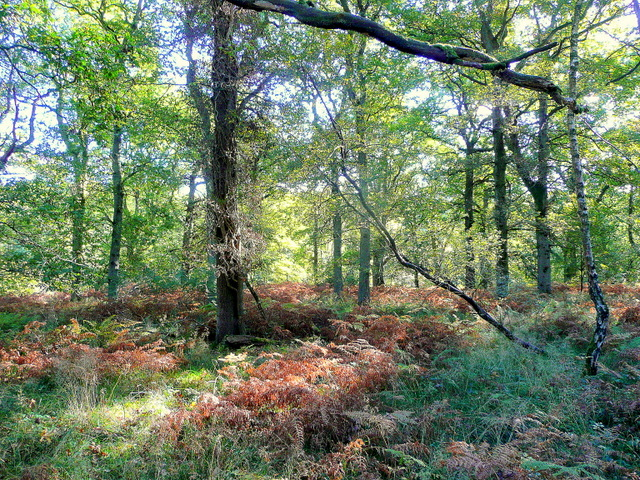 The Forest of Dean at Stonyhill Green