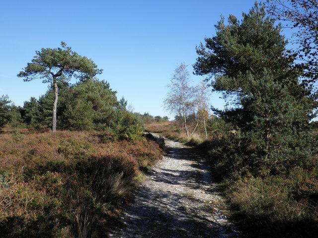 Track, across Ideford Common