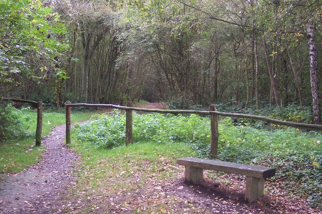 Bench and footpath into One Tree Hill