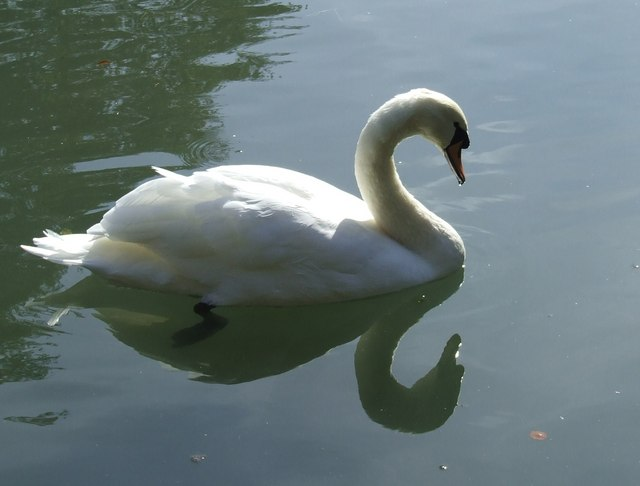Just Swanning about....