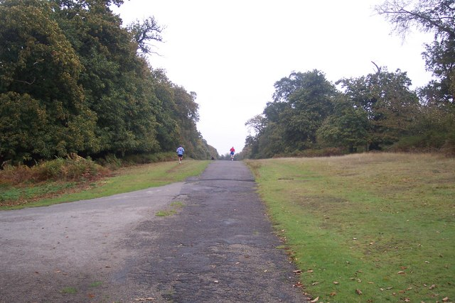 Runners on the Chestnut Walk, Knole Park