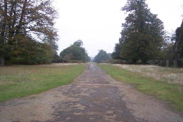Chestnut Walk in Knole Park