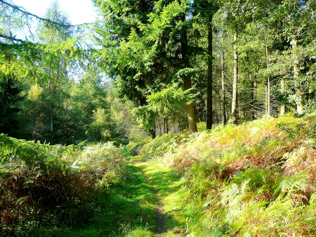 Path into the Sallowvellets Inclosure