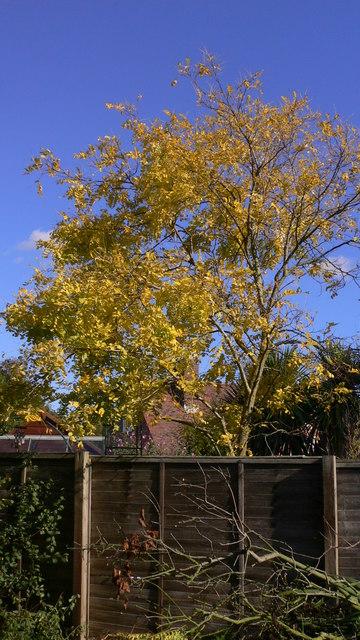 Pretty tree by footpath