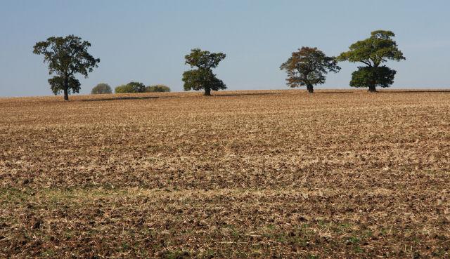Across fields at Nowton