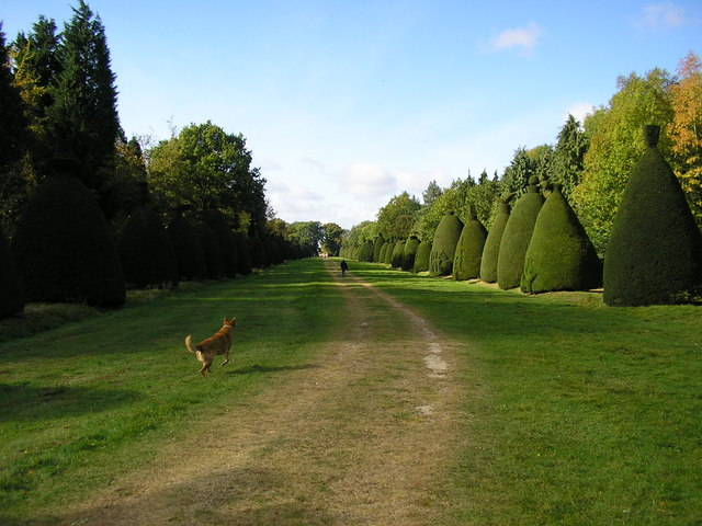 Clipsham Yew Tree Avenue