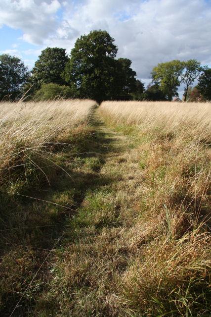 Path across field at Little Saxham