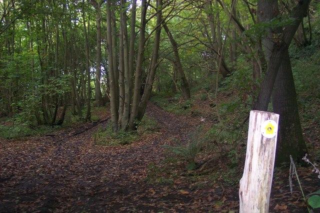 Greensand Way in Beechmont Bank Wood