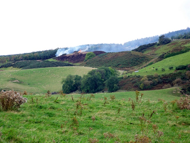 Rough grazing above Blairgowrie