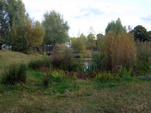 Pond and trees, Mile End Park