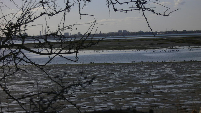 Winter migrants in Langstone Harbour