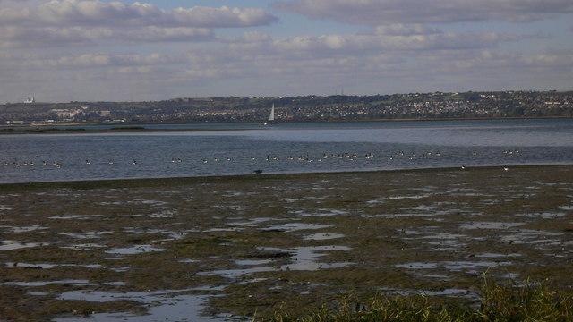 Brent geese in Langstone Harbour