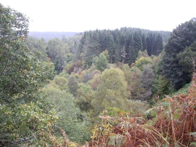 Woods around Eilean Aigas
