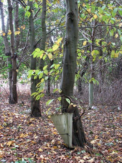 Poringland Community Wood