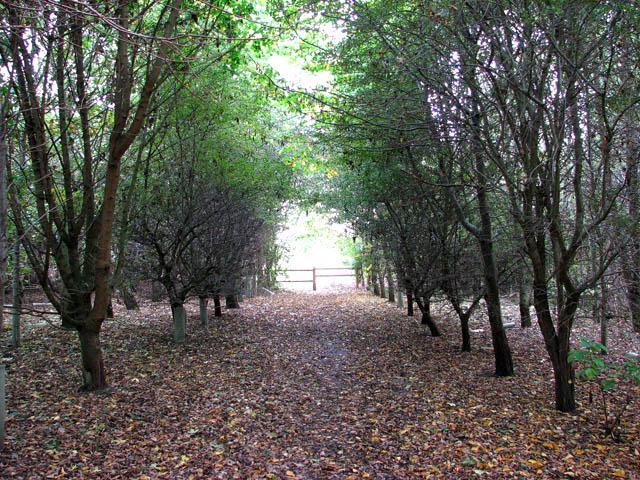 Footpath in Poringland Community Wood