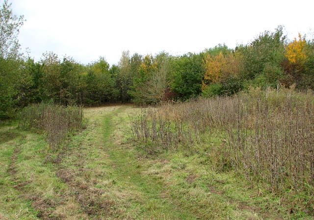 Paths traversing Poringland Community Wood