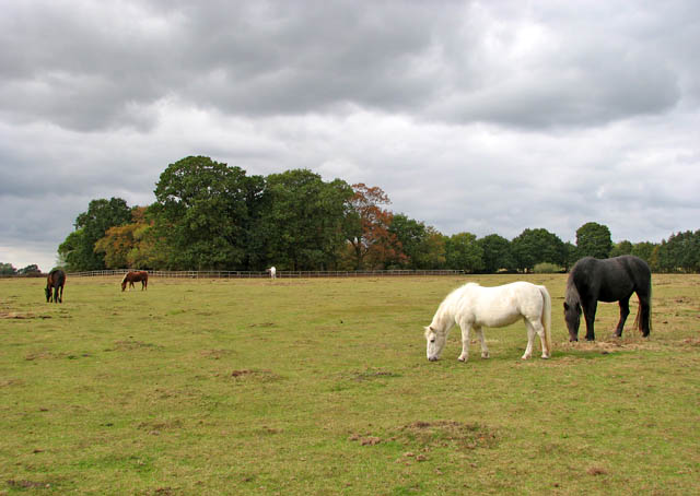 Pasture west of Dowry House