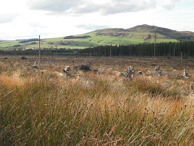 Clear felled area, Swinnie Plantation