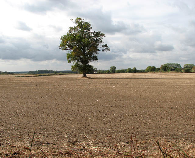 Solitary tree in recently drilled field