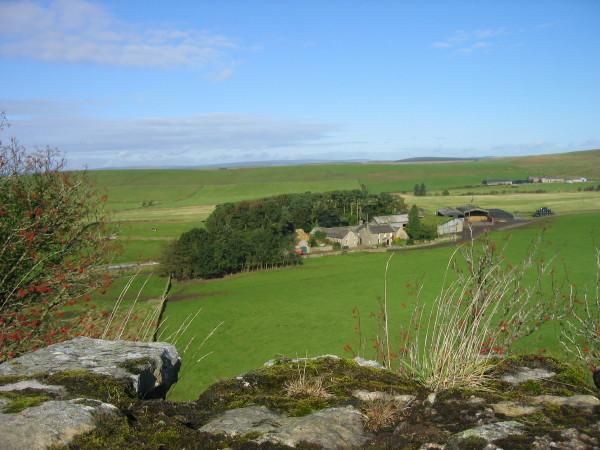 Cawfields Farm
