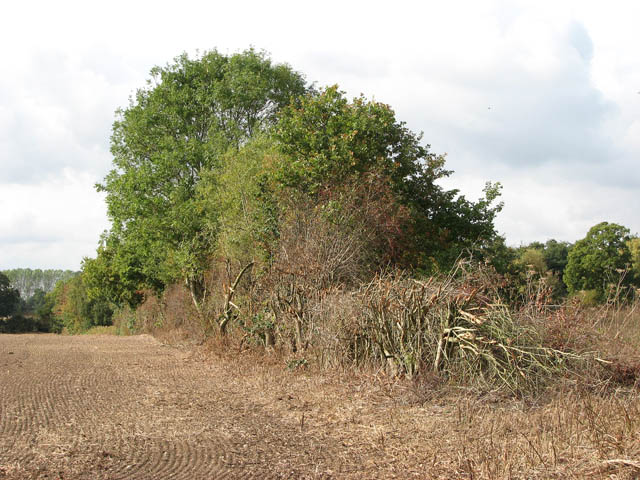 Hedgerow field boundary