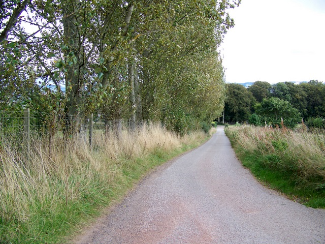 Poplar trees, Blairgowrie