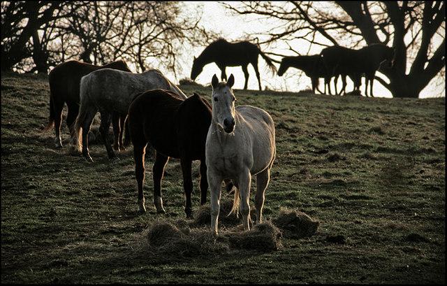 Winter Feed, Englefield Green, Surrey.
