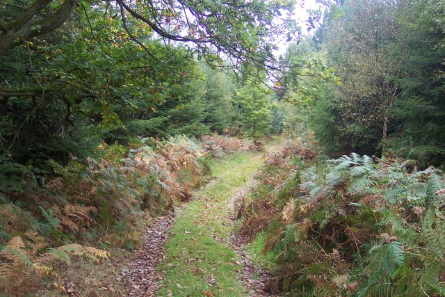 Footpath in Hyde's Forest