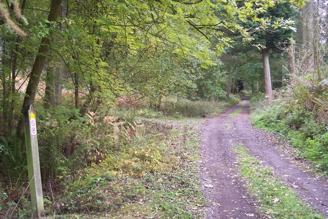 Footpath junction in Hyde's Forest