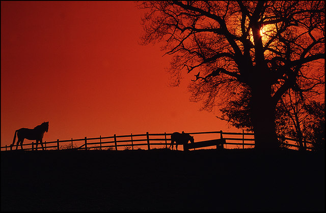 Horses on the hill, Englefield Green, Surrey