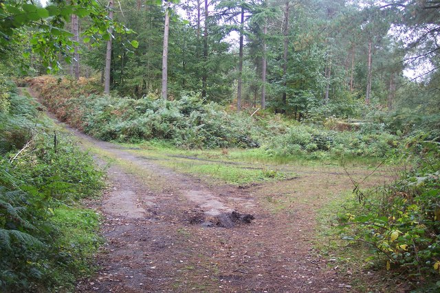 Seven Wents in Whitley Forest