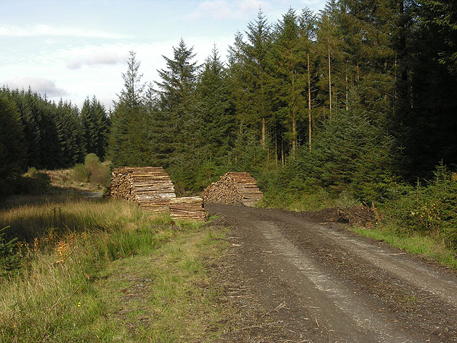 Forestry track and log stack by the Nant y Glog