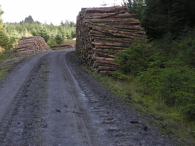 Forest track heading across Bryn Deilos