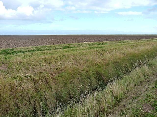 Farmland near Wainfleet (7)