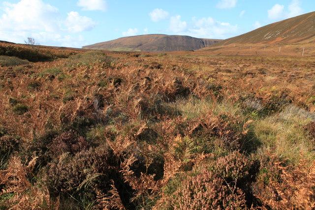 Moorland beside the South Burn on Hoy