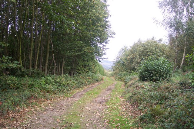 Track in Willow Wood