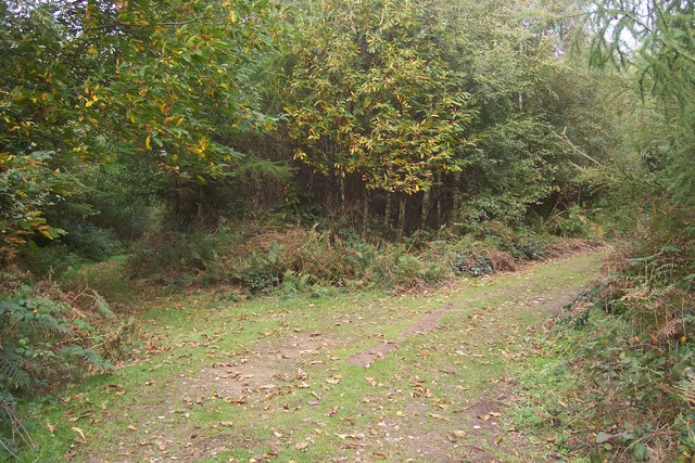 Footpath junction near Willow Wood