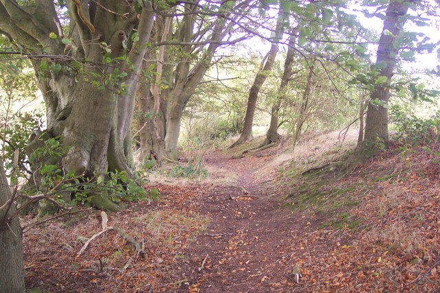 Footpath from Willow Wood to Church Road