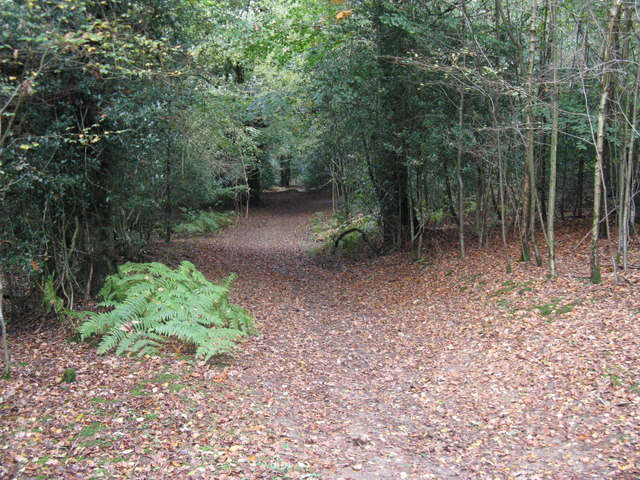 Leaves covering footpath to Suttons Farm