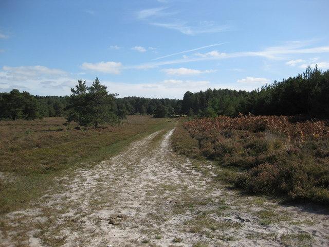 Wareham Forest Walk