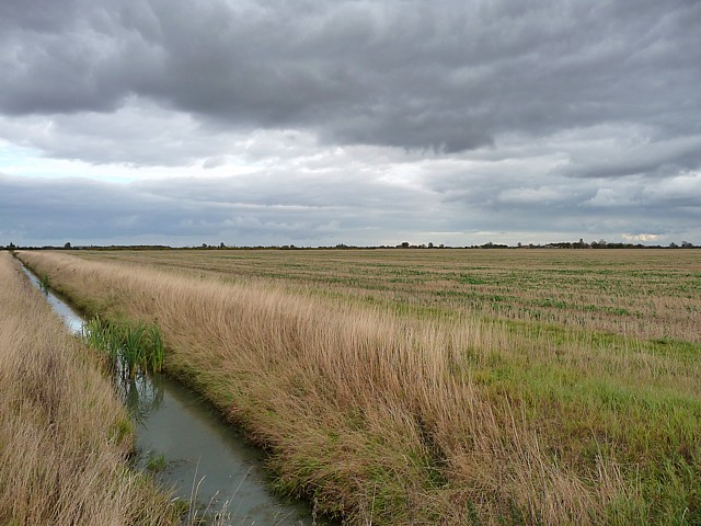 Farmland near Holland Fen (2)