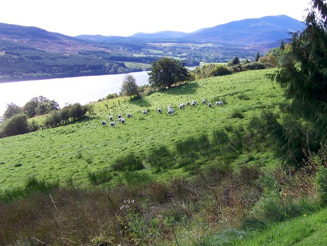 Rough grazing, Loch Tummel
