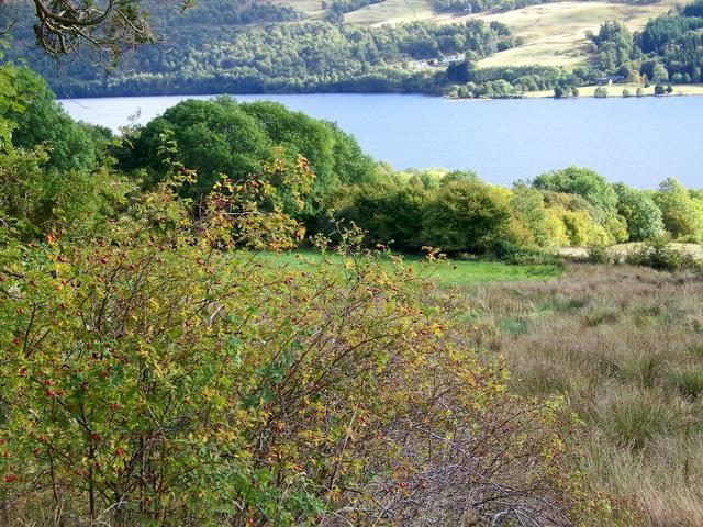 Rough grazing, Loch Tummel