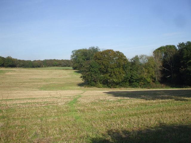 Mown field, Maes-y-Bryn Rd, Cardiff