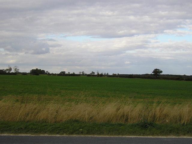 Fields Opposite Hooby Lane Quarry, Stretton